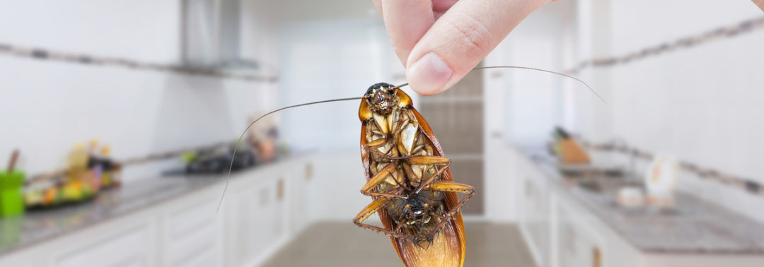 What Pest Can Carry Over 33 Types of Bacteria and Six Species of Parasite?
