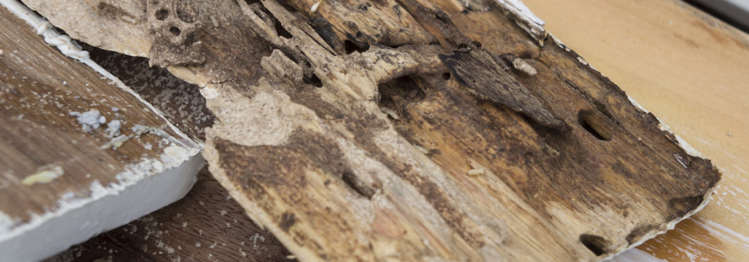 Drywood Termites are Coming to Tampa Bay