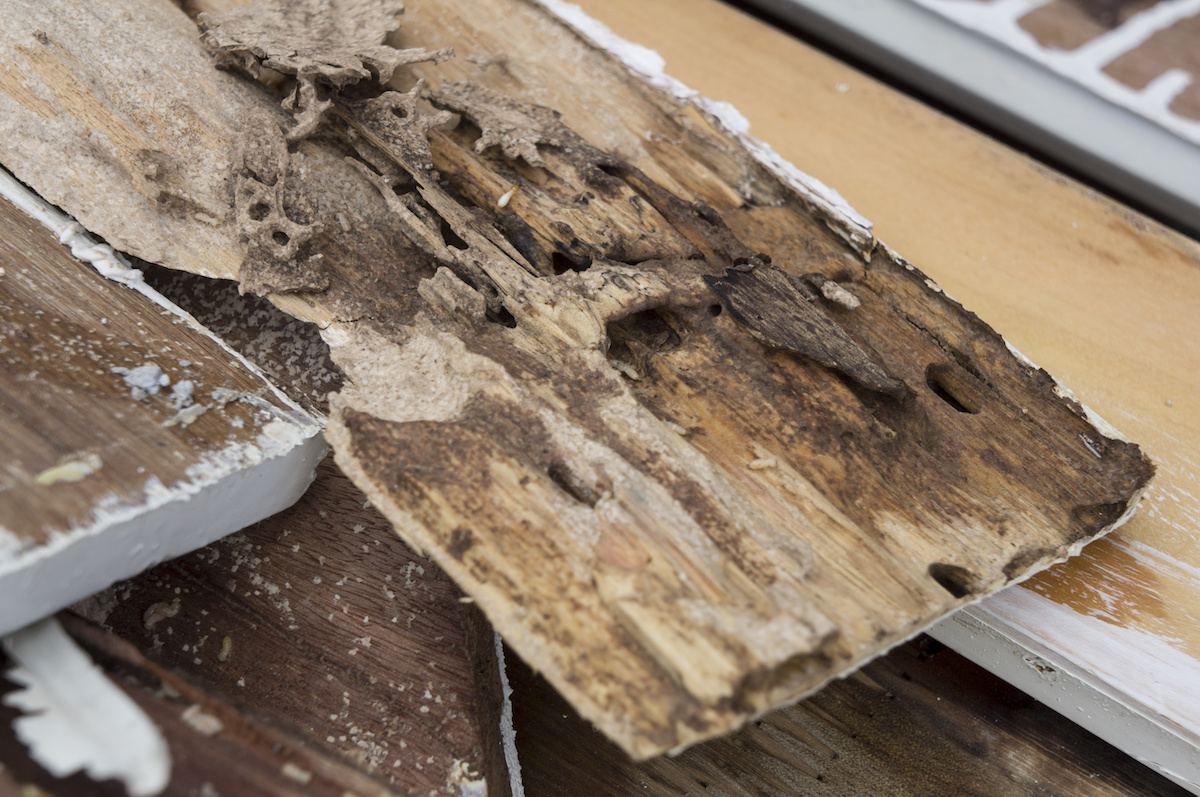Drywood Termites Are Coming To Tampa Bay Drive Bye Pest Exterminators