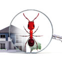Termite & Pest Control Inspection Services for Realtors in Tampa Bay