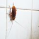 bugs in bathroom and kitchen