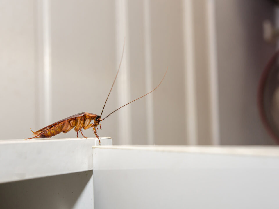 how to prevent pests in kitchen