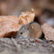 fall pest problems